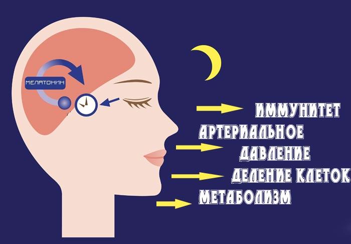 на что влияет мелатонин