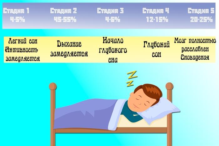 стадии сна