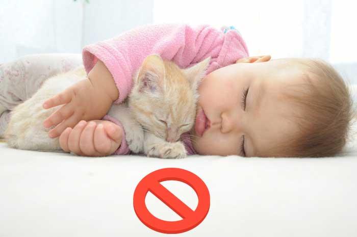малыш спит с котом