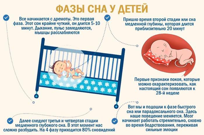 фазы детского сна
